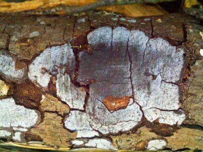 Fungus3